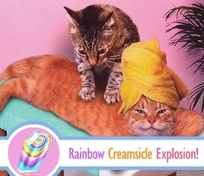 Cats, Massage