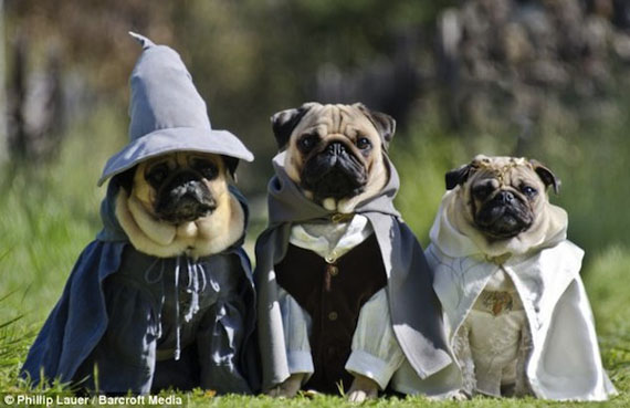 pug-lord-of-the-rings-costumes-5